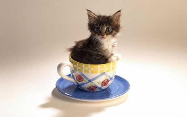 cute-animals-in-cups-12