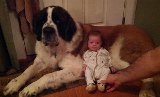 Γιγάντιοι σκύλοι και πανέμορφα μωράκια: 22 αξιολάτρευτες φωτογραφίες που θα σας φτιάξουν το κέφι