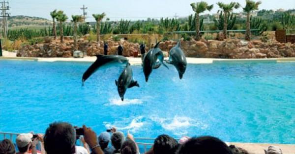 Αττικό Πάρκο: Επιβεβαιώθηκαν 4 θάνατοι δελφινιών! Τι απαντά η διοίκηση