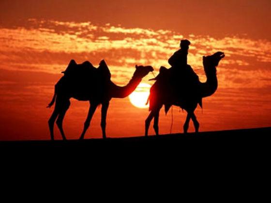 τεστ ζώο έρημος
