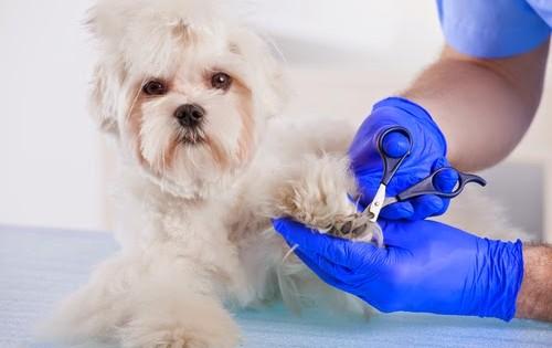 Νύχια σκύλου: Όσα πρέπει να ξέρεις για τα νύχια του σκύλου σου!