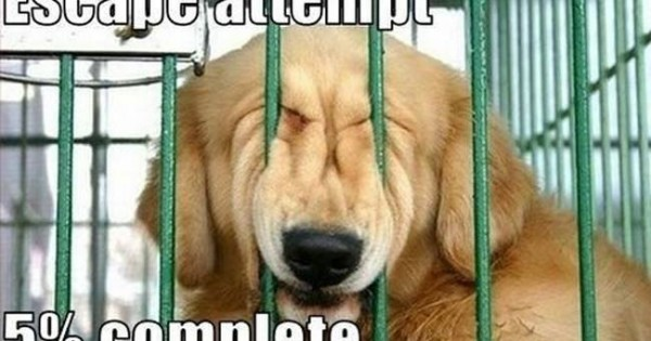 Ένας σκύλος βγαλμένος από το Prison Break! (video)