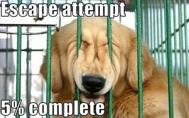 Σκύλος Prison Break