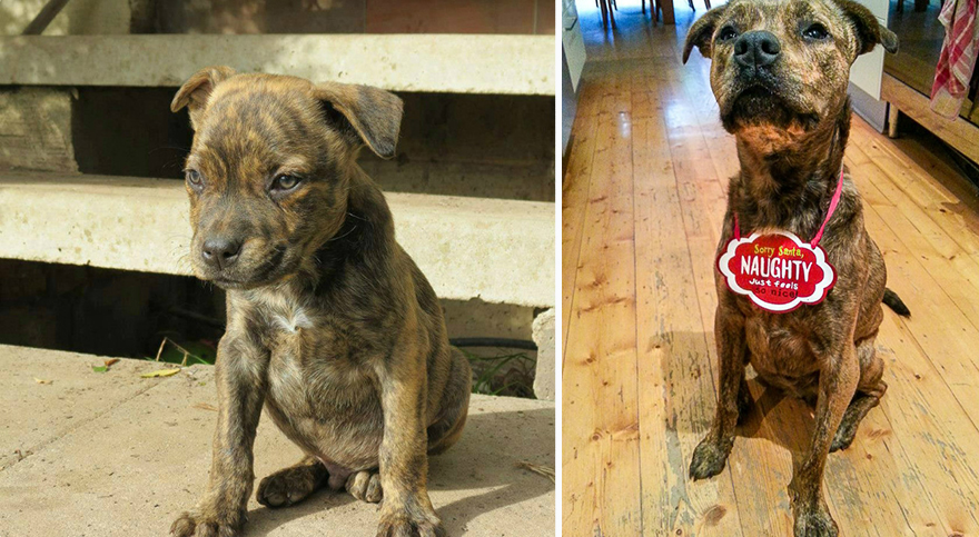 dog-rescue-before-after-karmen-bonnici-6