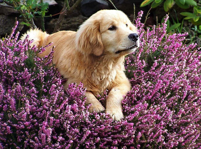 doginflowers