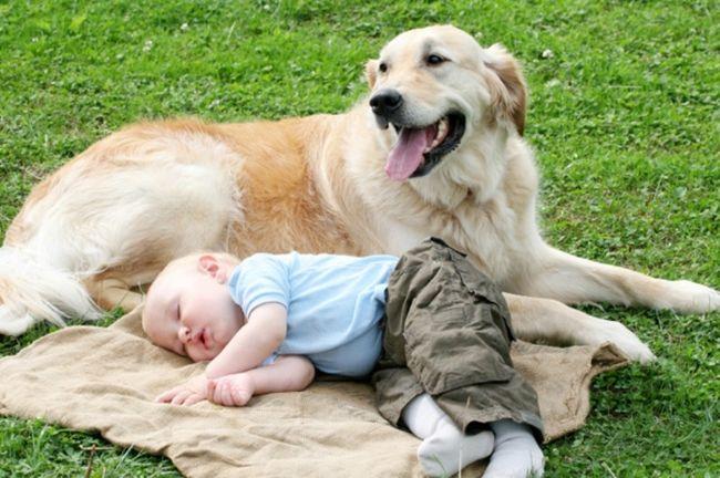υγεία μωρό κατοικίδιο κατοικίδια άσθμα