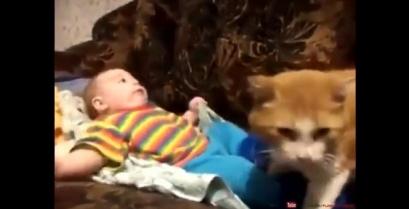 Μια γάτα βάζει για ύπνο το μωρό του σπιτιού (βίντεο)