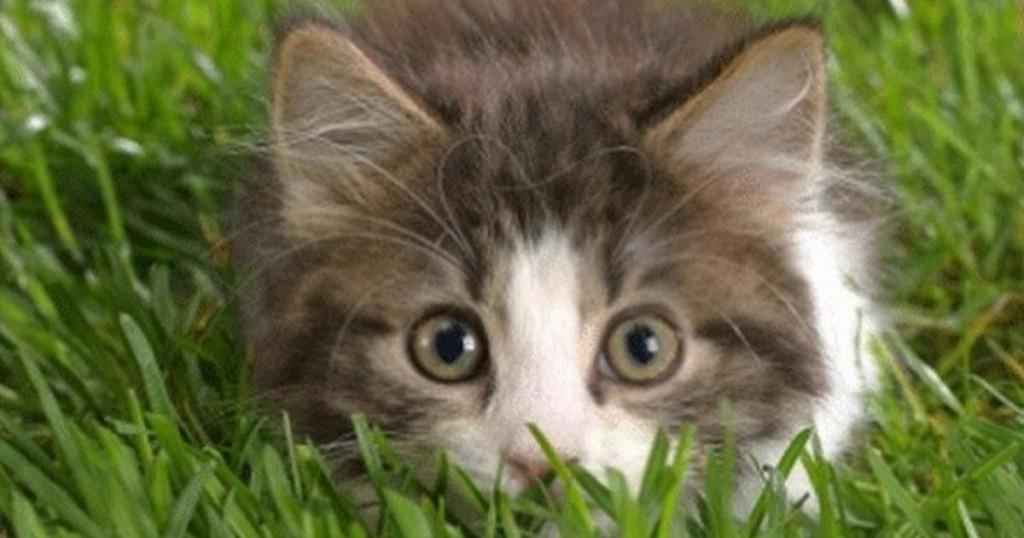 ιυοθεσία Γάτα Βίντεο