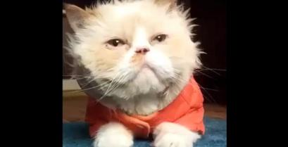 Απλά δεν υπάρχει: Η γάτα Michael Jackson! (βίντεο)
