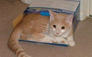 Γιατί άραγε οι γάτες αγαπούν τα κουτιά; (εικόνες – βίντεο)