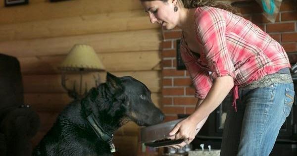 Σκύλοι ανιχνευτές γλουτένης σώζουν ανθρώπους
