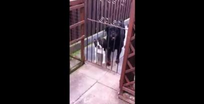 Απίστευτος σκύλος λέει »Hello» (βίντεο)