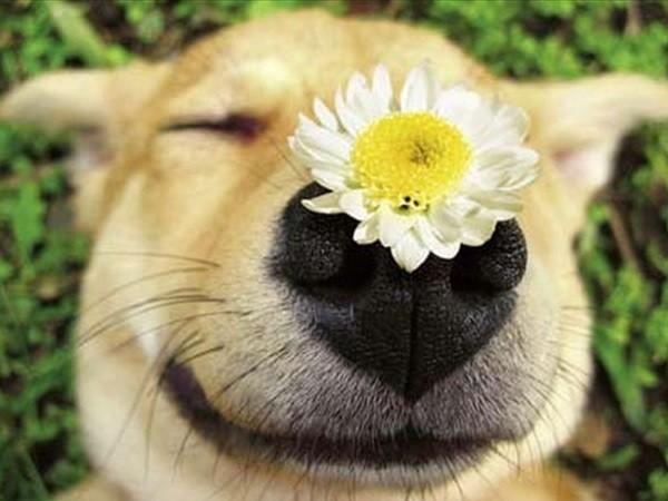 λουλούδια κατοικίδια