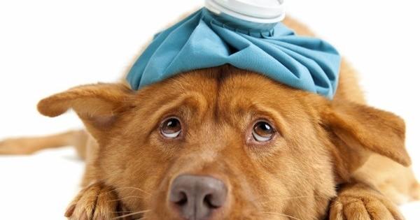 Δηλητηρίαση σκύλου και γάτας – Τι να κάνω;