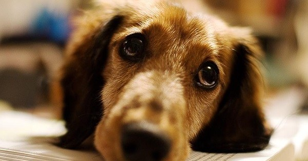 Έρευνα: Οι σκύλοι ξεχωρίζουν τα ανθρώπινα πρόσωπα