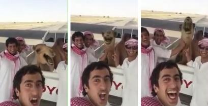 Αυτή η καμήλα κυριολεκτικά πεθαίνει στα γέλια (βίντεο)