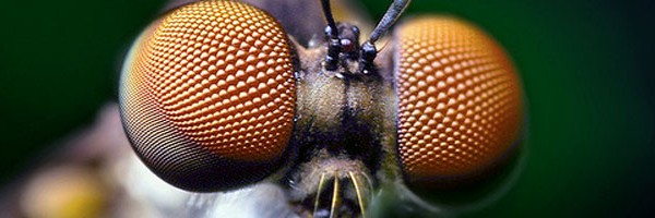 Η ζωή μέσα από τα μάτια της μύγας (εικόνες)