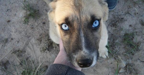 Μεγάλο αφιέρωμα: 36 φωτογραφίες από τα ομορφότερα μάτια στο ζωικό βασίλειο