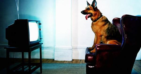 Τι ακριβώς βλέπει ο σκύλος μου στην τηλεόραση;
