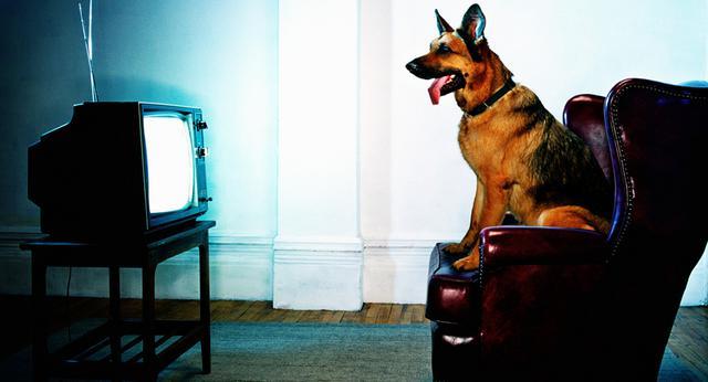 τηλεόραση Σκύλος