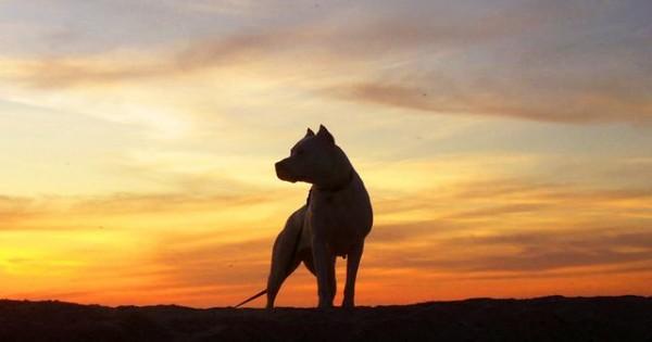 Πώς ένα Dogo Argentino ρίσκαρε τη ζωή του για να σώσει τα κοριτσάκια της οικογένειας (videos)