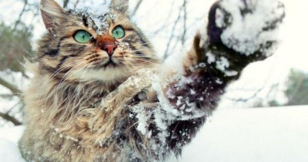Μπορεί η γάτα σας να προβλέψει τον καιρό; (video)