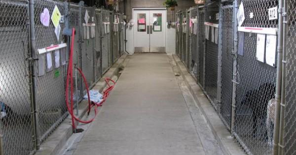 Το καταφύγιο αδέσποτων ήταν… βασανιστήριο για το σκύλο (video)
