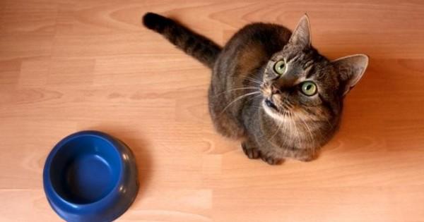 6 πράγματα που δεν πρέπει ποτέ να ταίζεις τη γάτα σου!