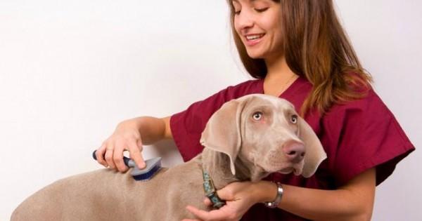 Tips για την περιποίηση του σκύλου σας (video)