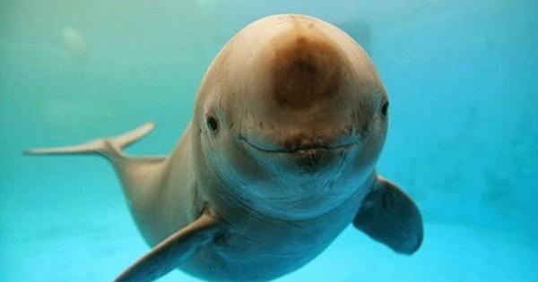 30 ζώα που απλά δεν μπορούν να κρύψουν τη χαρά τους (εικόνες)
