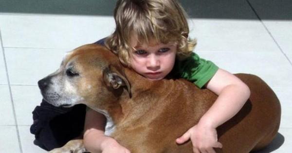Τι απάντησε ένα 6χρονο παιδί όταν του ανακοίνωσαν ότι ο σκύλος του έχει καρκίνο