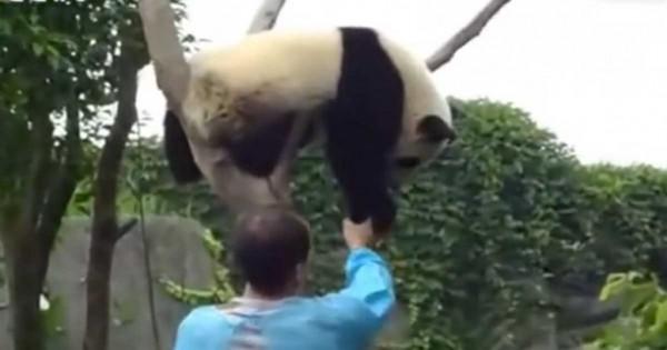 Η ανεκτίμητη αντίδραση του πάντα όταν ένας άντρας το βοήθησε να κατέβει από το δέντρο (βίντεο)