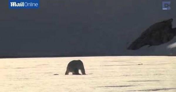 Πολική αρκούδα κάνει… skate στον πάγο! (βίντεο)
