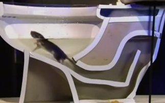 ποντίκια μπάνιο Βίντεο