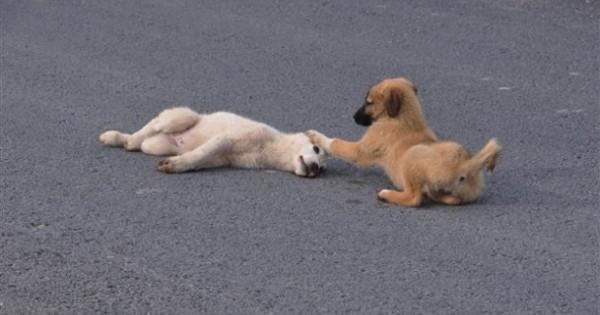 Ρίγος συγκίνησης: Σκύλος έμεινε δίπλα στον τραυματισμένο τετράποδο φίλο του μέχρι να τον πάνε στον κτηνίατρο