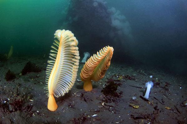 κοράλλια θάλασσα