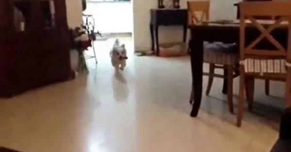 Σκύλος πάει να ανέβει στον καναπέ και… (ξεκαρδιστικό βίντεο)
