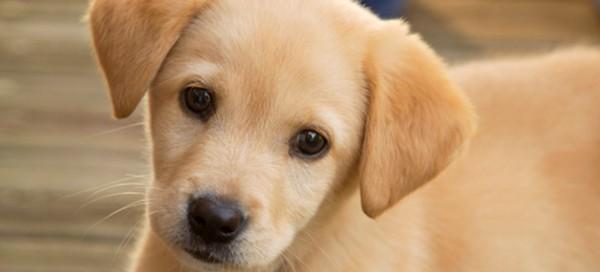 Μη ψάχνετε άλλο! Σας έχουμε τα 5 κορυφαία ονόματα σκύλων για τις 10 δημοφιλέστερες φυλές