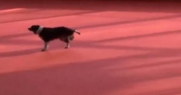 Σκύλος και χορεύτρια ενώνουν το ταλέντο τους και το αποτέλεσμα είναι εντυπωσιακό! (βίντεο)