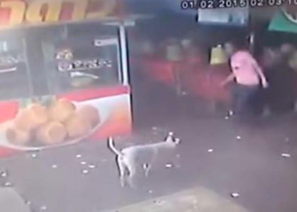 Σκύλος κακοποίηση ζώων