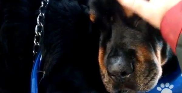 Ραγίζει καρδιές το βίντεο: Ένας σκύλος θρηνεί τον θάνατο του αδελφού του
