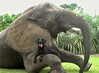 Τα πιο παράξενα ζευγάρια ζώων (βίντεο)