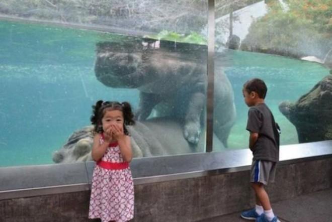 ορέξεις ζωολογικός κήπος ζώα