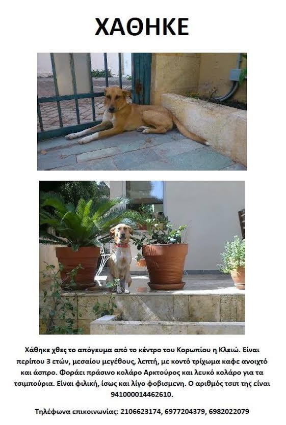 Σκύλος Κορωπί