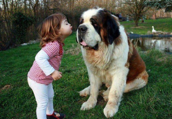 xgiant-dog-small-owner.jpg.pagespeed.ic.QfUcqWIcFr