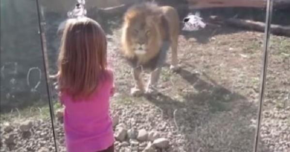 Άκρως απολαυστικό βίντεο: Παιδιά επισκέπτονται ζωολογικό κήπο – Δείτε τις αντιδράσεις τους