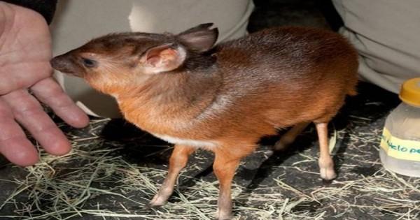 Τα 24 μικροσκοπικότερα ζώα του κόσμου (εικόνες)