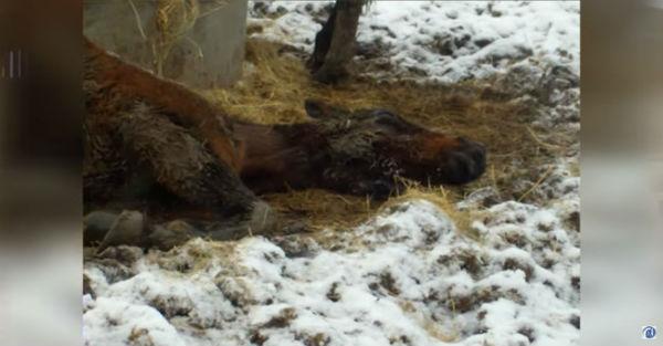 Εικόνες Βίντεο άλογο