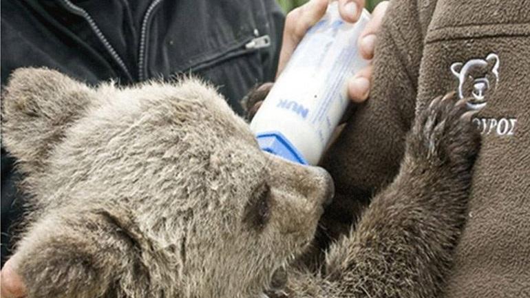 παιδιά Αρκτούρος αρκούδες