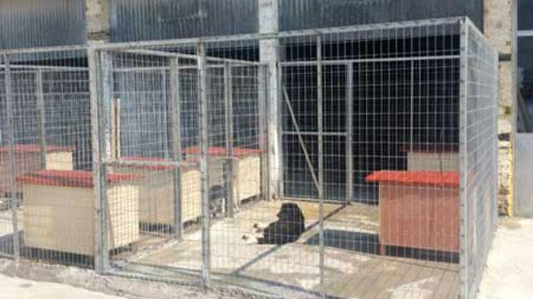 Καταφύγιο Αδέσποτων Ζώων Άρτα αδέσποτα σκυλιά
